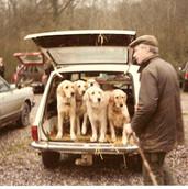5 well-mannered goldens await their mast