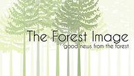 ForestImageLOGOweb (002).jpg
