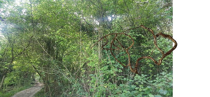 woods vines.jpg