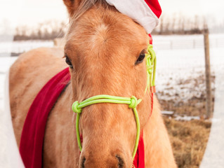 The First Neigh of Christmas