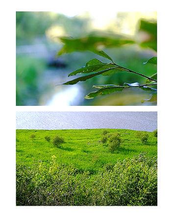 Marais Orx Lande et Feuillage.jpg
