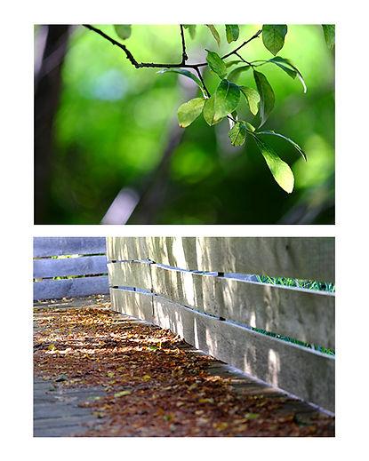 Marais Orx Passerelle et sous-bois.jpg