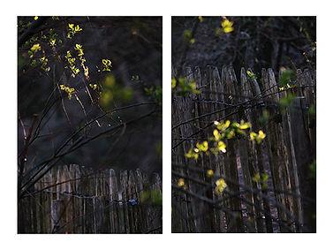 Marais Orx Cloture Lucioles.jpg