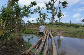 Crossing the River on Coconut trees