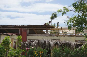 Church roof needing repairs