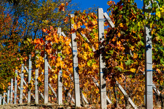 LE LANGHE, regione storica del Piemonte