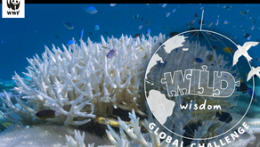 CBSE & WWF to organize - India Wild Wisdom Global Challenge : Schools & Students can participate