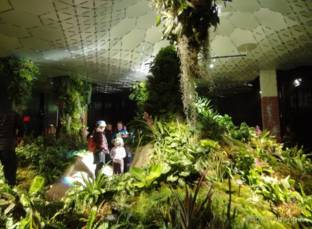 The Lowline - World's First Underground Park