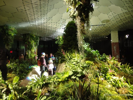 The Lowline - World's First Underground Park