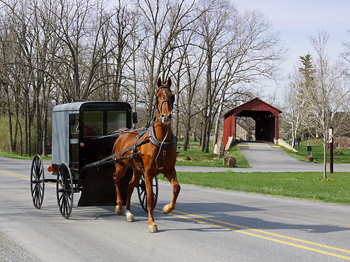 Private Tour from New York to Amish Country - $949.00