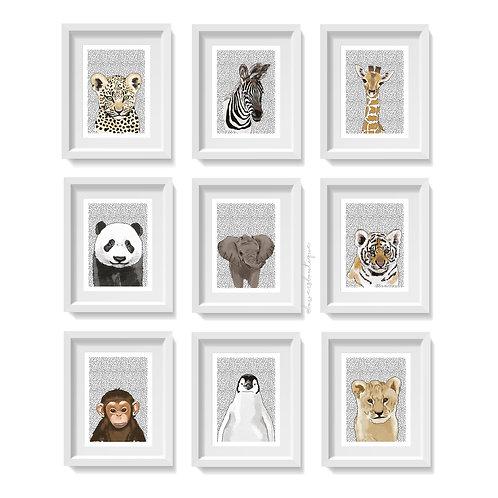 Dot Background & Colour - Baby Animal Prints