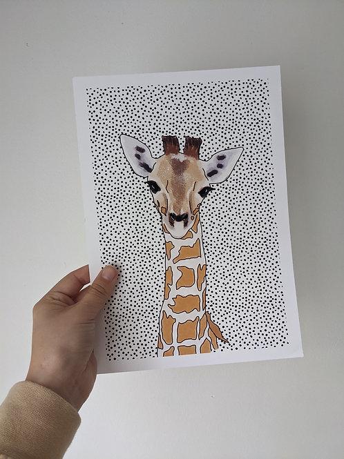A4 Zebra Dot Print - Dents