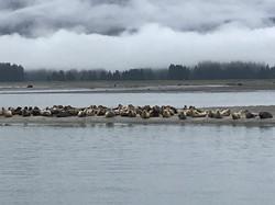 Seals along your way to LeConte Glacier