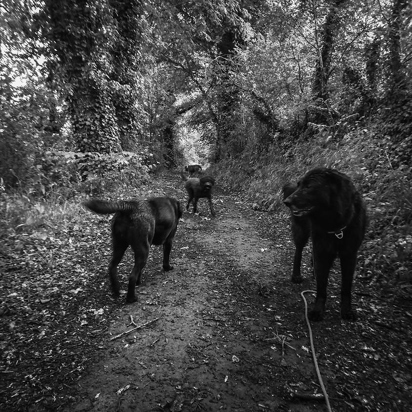 Marche Cani nocturne du vendredi 23 août