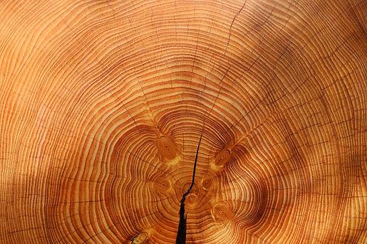 wood-3212803.jpg