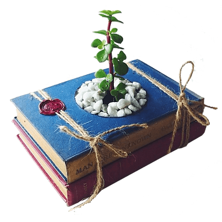 livros-velhos-viram-suporte-para-plantas