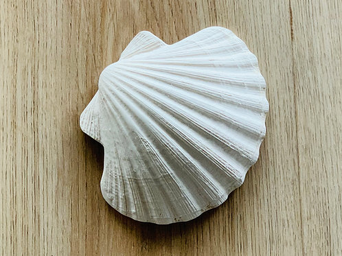 Concha Clam Shell