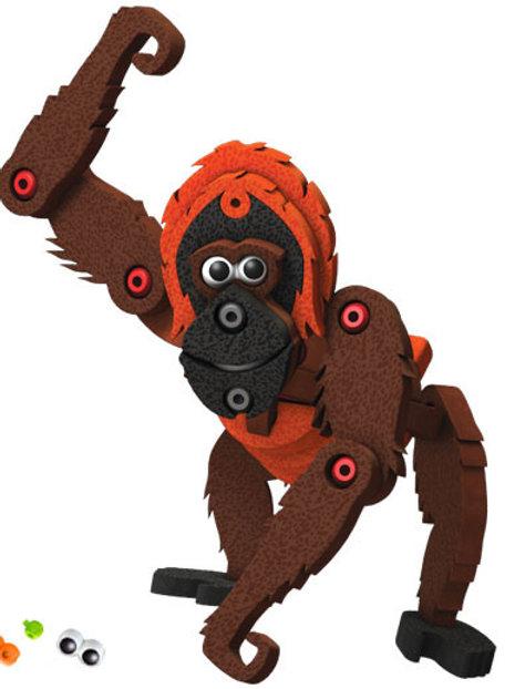 Primates - The Orangutan