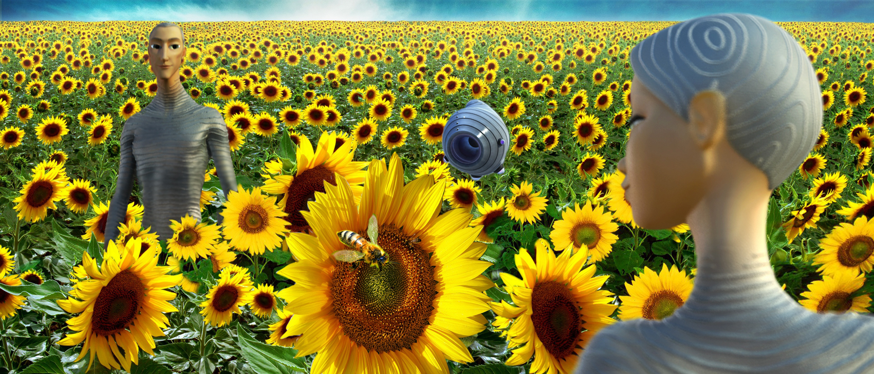 Sunflower MGO field