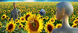 Sunflower MGO field