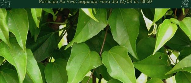 Guaco e Oliveira - Conversando sobre Plantas Medicinais com Marcos Guião