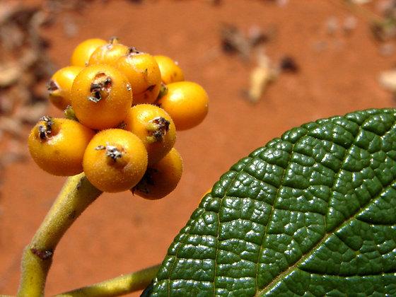 Congonha Bugre