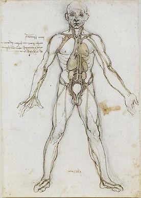 Anatomical_Male_Figure_Showing_Heart,_Lu