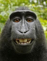 Monkey Business (upright).png