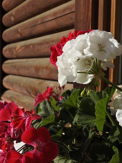 Büro_mit_Blumen2.JPG