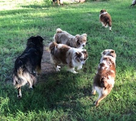 group dogs.jpg