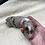 Thumbnail: Missy's litter