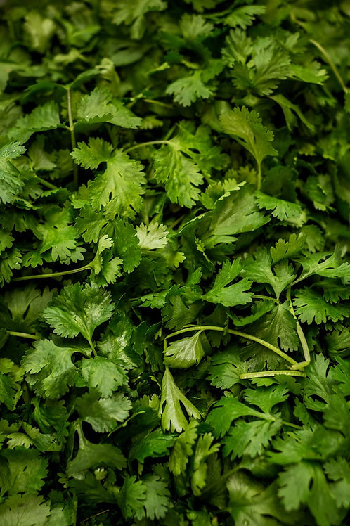 LARGE BUNCH CORIANDER
