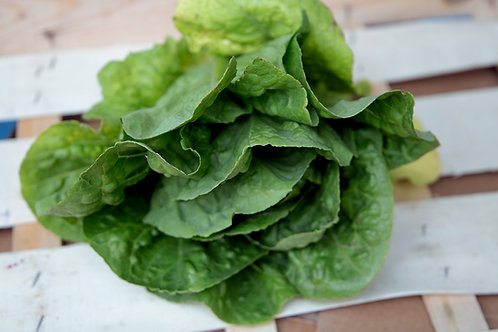 LOCAL COS LETTUCE