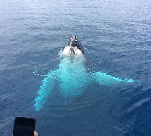 margaret river whale watching tour.jpg
