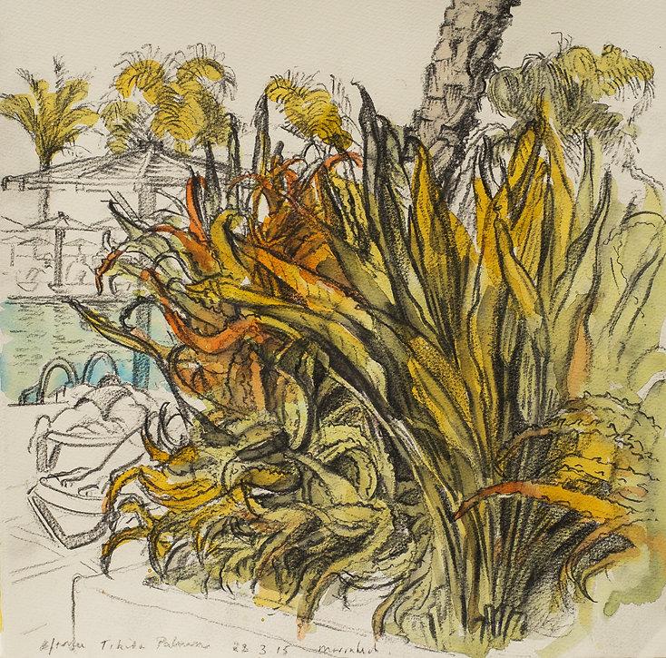 Marrakech Suite- Poolside Aloe Vera, Tikida Palmeria, 28-3-15 Crayon and watercolour on paper. Simon Page