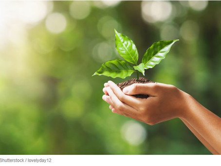 How Start-ups Put Sustainability at the Core of Their Business Model