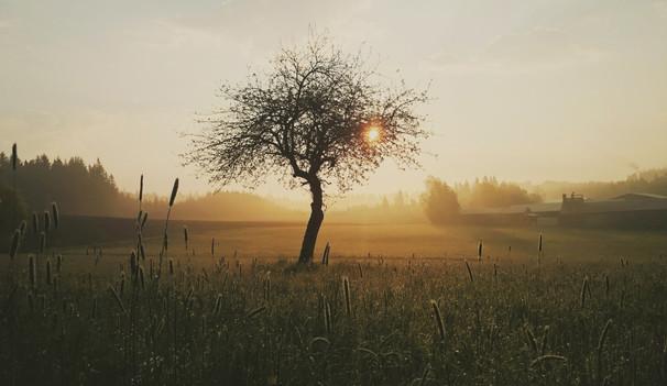 Tree_forweb.jpg