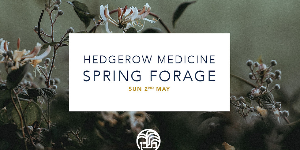Hedgerow Medicine Autumn Forage