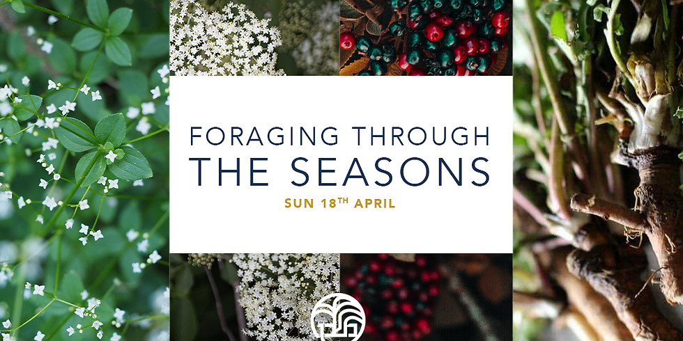 Foraging Though The Seasons