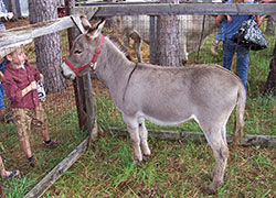 Donkey display