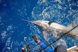 Fishing St. Croix - Deep Sea Island Charters-61