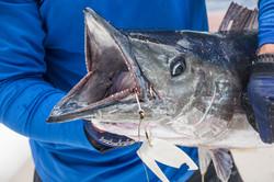 Fishing St. Croix - Deep Sea Island Charters-60