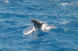 Fishing St. Croix - Deep Sea Island Charters-77