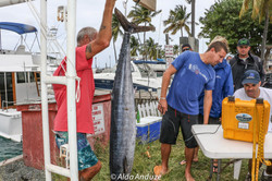 Fishing St. Croix - Deep Sea Island Charters-9