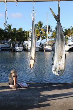 Fishing St. Croix - Deep Sea Island Charters-70