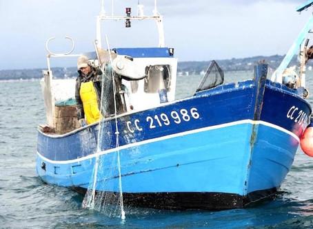 Comment choisir ses produits de la mer de façon plus durable ?