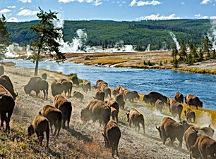 yellowstone-national-park-blog.jpg