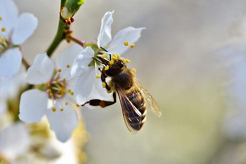 pollinator.jpg