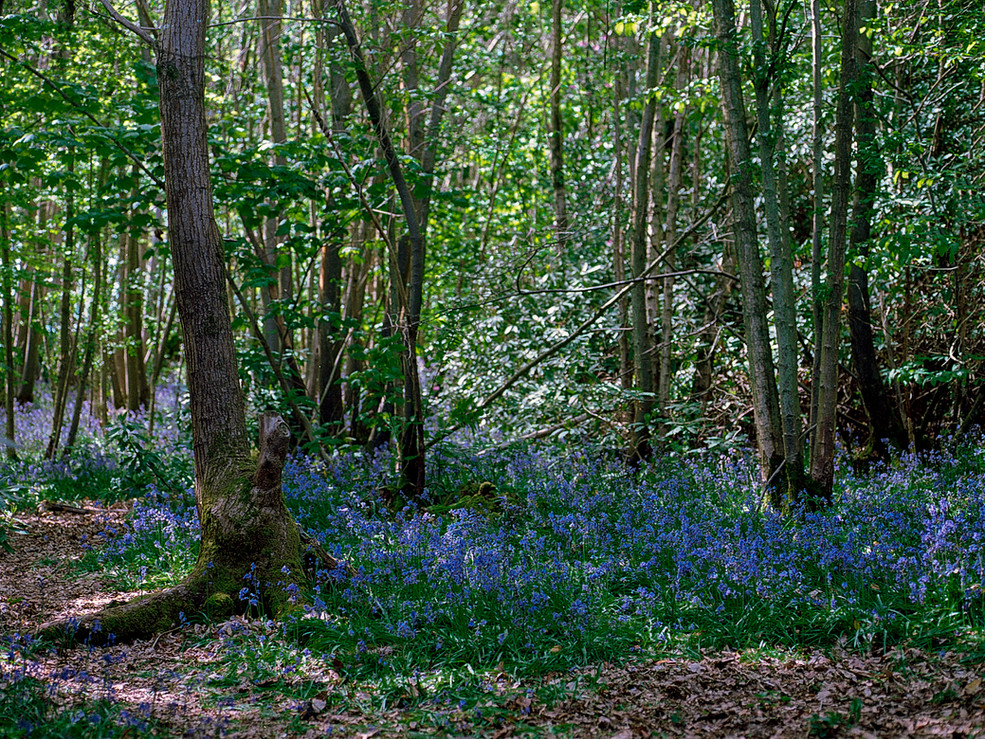 Friston Forest,2015