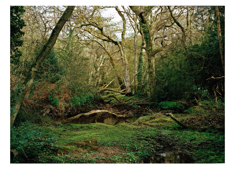 New Forest,2015